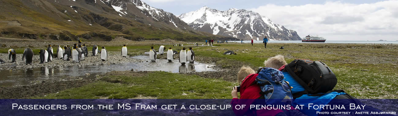 Passengers from the MS Fram get a close-up of penguins at Fortuna Bay